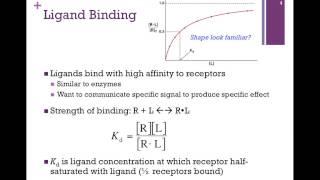 066-Ligand Binding