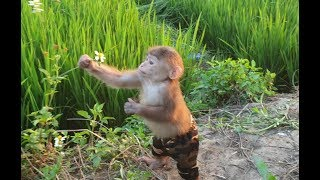 Baby Monkey |Tom And Doo Go For A Walk And Explore The Grandparents' Field