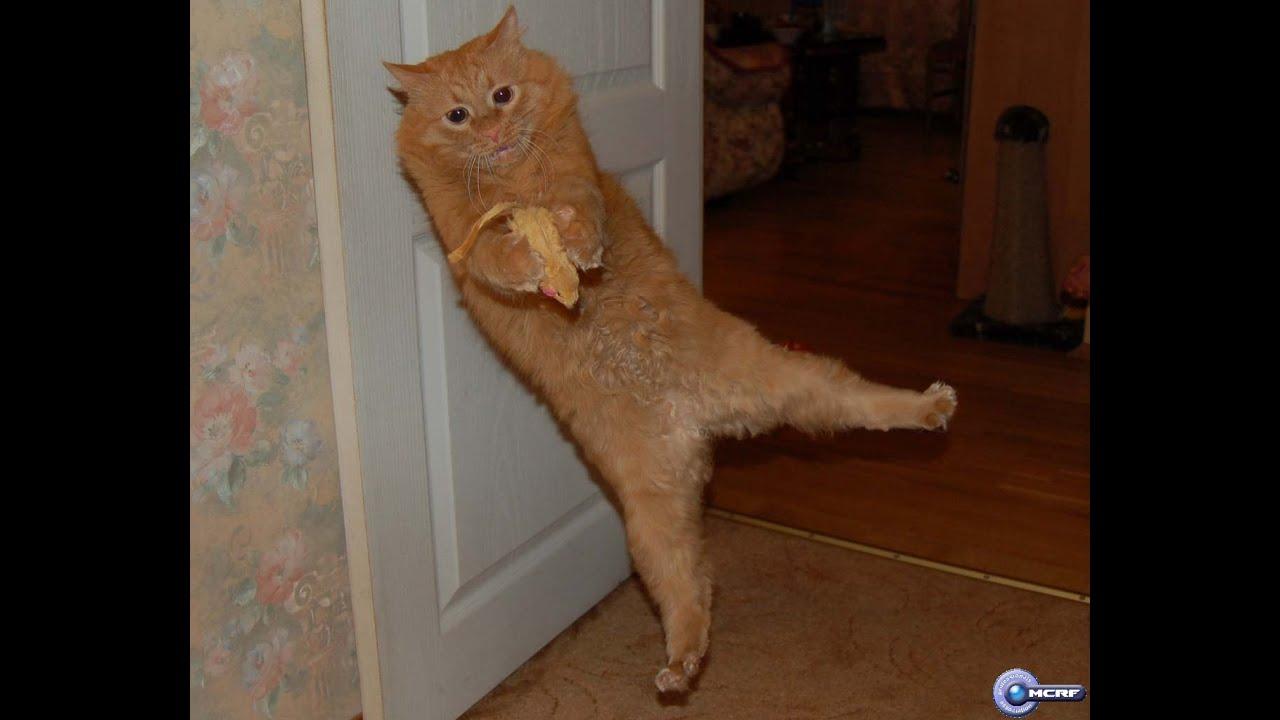 Почему от валерьянки коты пьянеют