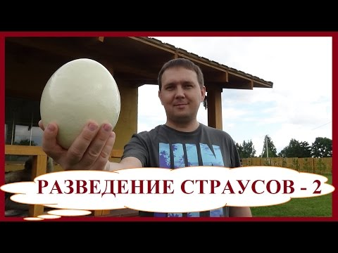Разведение страусов - 2. Бизнес в деревне. Страусиные яйца. Мыло и крем из страусиного жира.