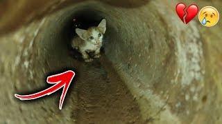 اصعب حالة انقاذ مرت في حياتي !! قطة المجاري💔😢