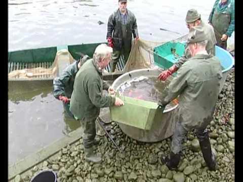 Valdštejnská zahrada - výlov ryb