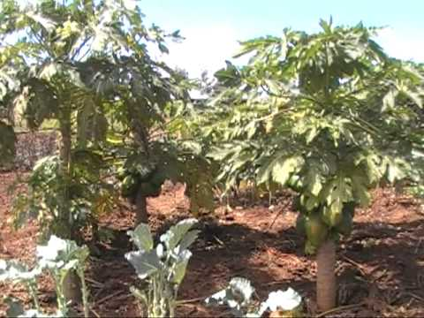 Best small scale farmer in Kenya 2010