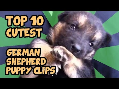 TOP 10 CUTEST GERMAN SHEPHERD PUPPIES OF ALL TIME - YouTube