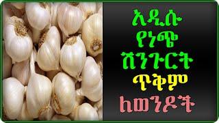 Health Benefits Of Garlic For Men