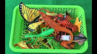 Learn Colors With Sea Animals Names and Insect Names Shark Toys For Kids Educational