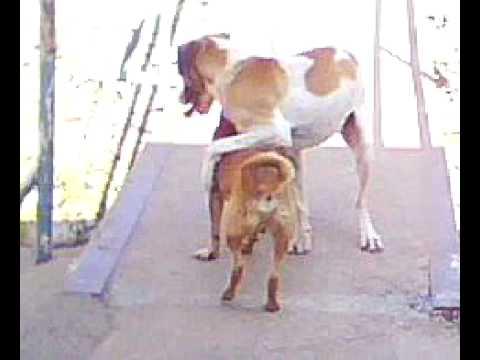 Cachorro viado