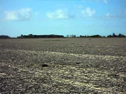 Galgos de Campo 2010 (Pancho Solo).