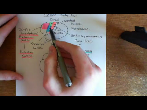 Parkinson's Disease and Antiparkinson Drugs Part 8