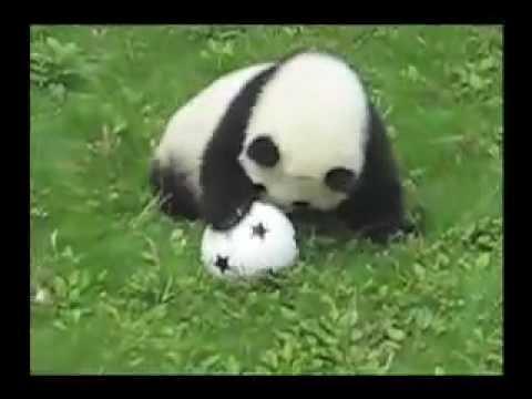 Baby Panda játszik