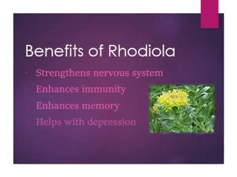 Using Rhodiola Rosea to Eliminate Fatigue During a Cleanse