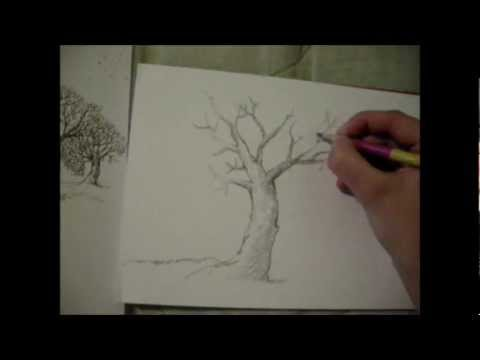 Dibujo arboles conceptuales youtube for Arboles de jardin de hoja caduca