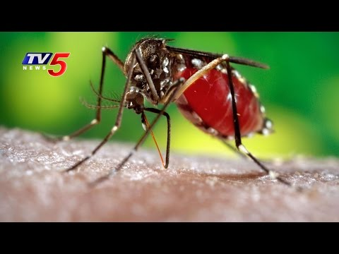 New Deadly Effects of Dengue Virus Discovered : TV5 News