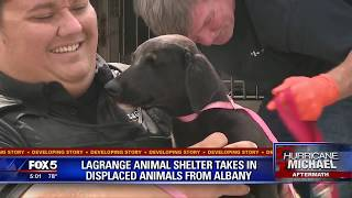 Animal shelter takes in displaced animals