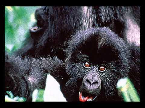 Stop the killing - save endangered wildlife