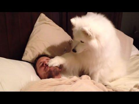 Tu perro, el mejor despertador
