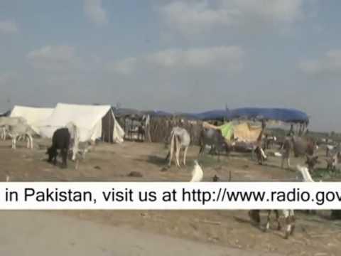 Sindh Flood - English Promo 2 (2011).flv