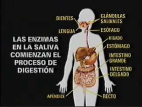 Sistemas del cuerpo humano youtube for Interior del cuerpo humano
