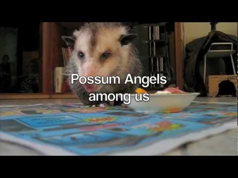 Possum Posse Possum Angels Among Us