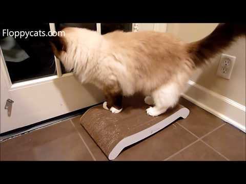 Petfusion reversible curve scratcher review for Curved cat scratcher