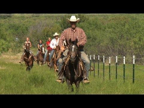Abused Horses Receive Care and Training