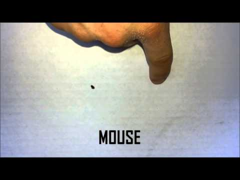 The Difference Between Bat And Mouse Droppings Youtube