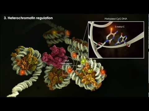 Epigenetics and Soft Inheritance