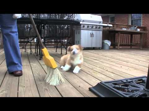 Otis vs The Evil Broom