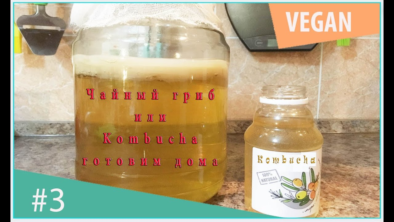 Как сделать чайный гриб в домашних условиях фото 75