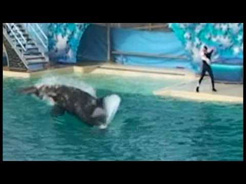 shamu-attacks-and-kills-pelican-during-show.html
