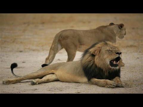 U.S. Dentist Accused of Killing Cecil the Lion