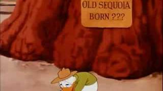 Donald Duck Old Sequoia