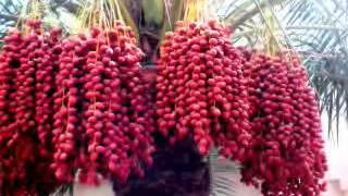 Dhana Dhanya Pushpa Bhara Music Deshergaan Bangla Karaoke Track Sale Hoy Contact Korun