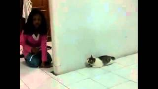 The Flaying CAT     Funny
