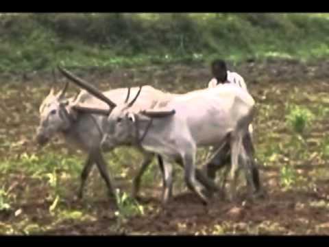 Amaravathi(telugu Jaathi Velugu Amaravathi) Song By Pavan
