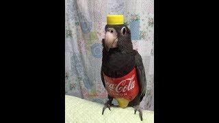 Os Pássaros Mais Engraçados do MUNDO #1