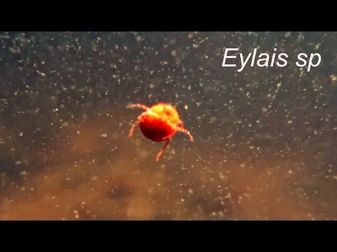 Header of eylais