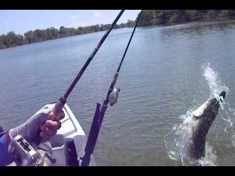 Alligator Gar Fishing