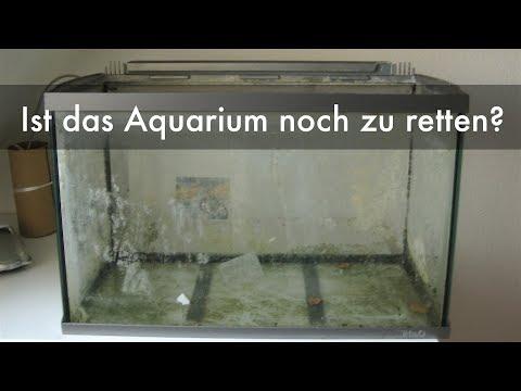 Aquarium vom Sperrmüll neu verkleben | Reseal of an aquarium from trash