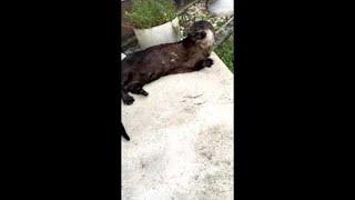 I Don't Speak Otter, Sorry
