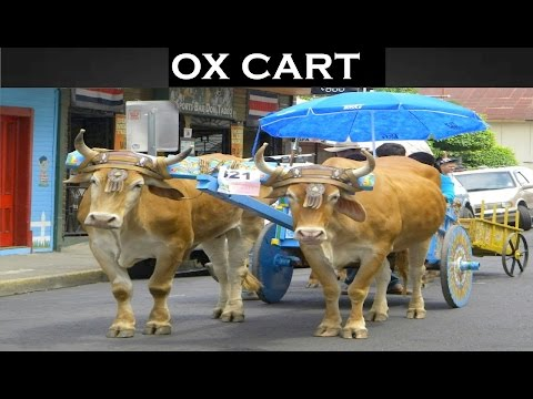 Ox Cart Sound Effects | HIGH QUALITY AUDIO