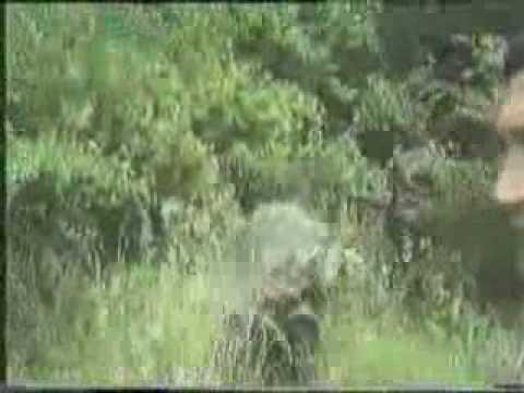 Rat u Bosni 1.Dio