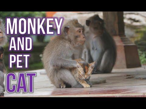 猿と猫の意外な関係。子猫を離さない猿