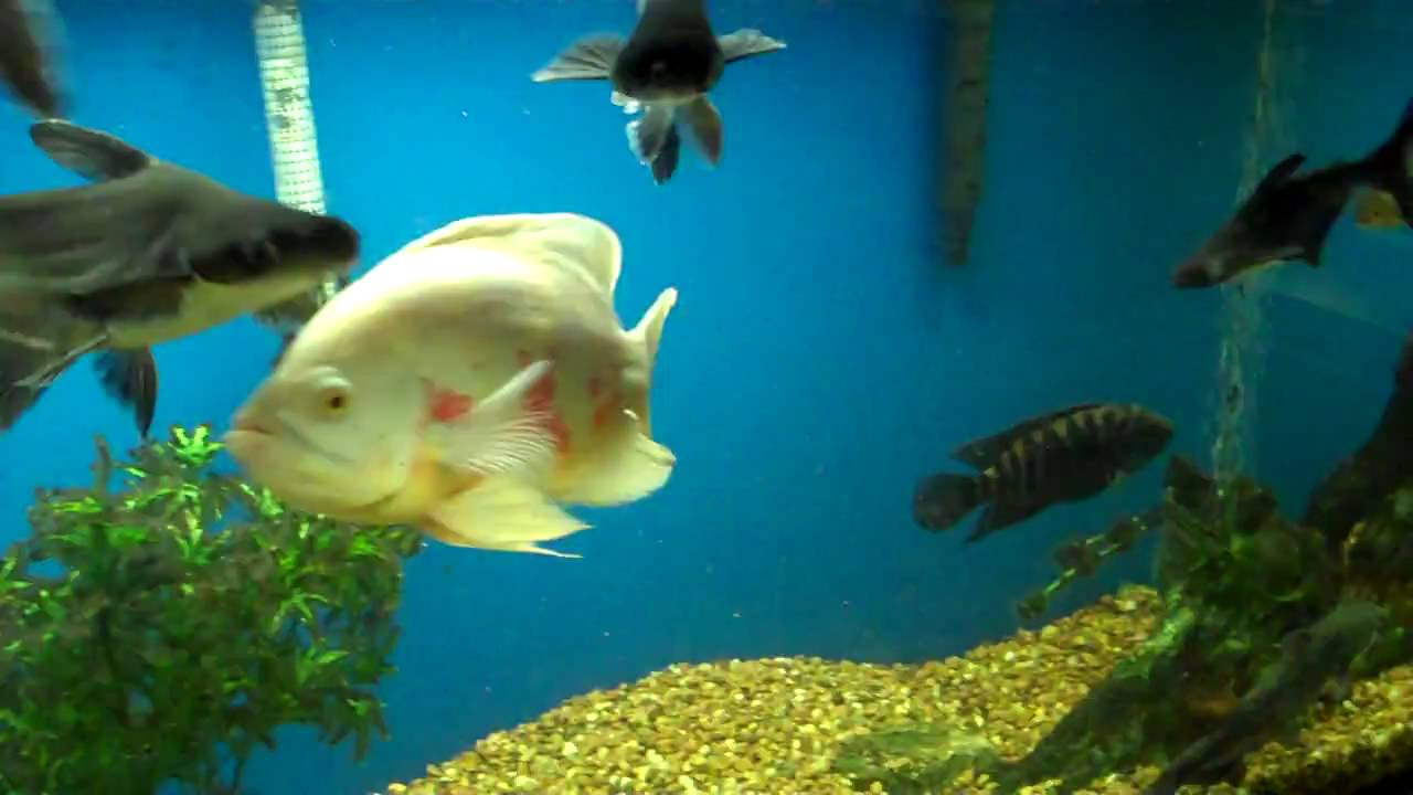 Harp 39 s exotic fish pets tropical freshwater fish 5 for Fish and pets unlimited