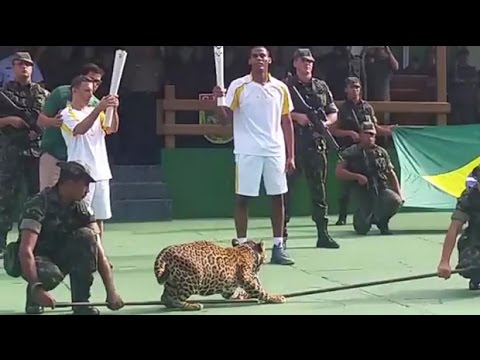 Jaguar used in Olympic torch event killed in Brazil