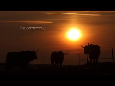 Toropasión - Sorprendente felicitación navideña 2012/13