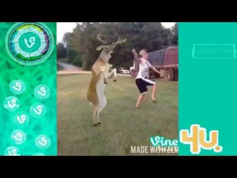 The Crazy Animals ★ Cute Pets Part2   Vine Compilation 2014 ★ Ultimate Version