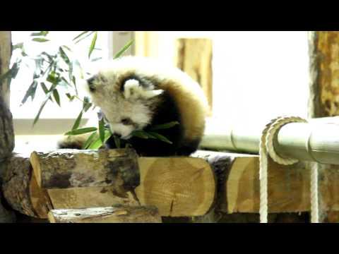 セイナ&キキのジュニア 茶臼山動物園