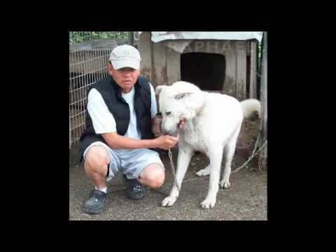 The Three White Dogs / Virgin of the Globe Farm
