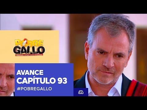 Pobre Gallo - Avance Capítulo 93